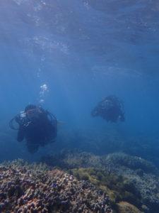 沖縄 本部 ゴリラチョップ 崎本部 ダイビング 体験ダイビング ビーチダイビング