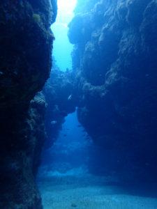 沖縄 北部 水納島 瀬底島 ダイビング ボートダイビング ファンダイビング