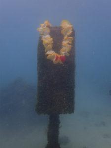 沖縄 那覇 NSP 那覇シーサイドパーク ダイビング ファンダイビング ビーチダイビング