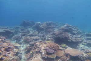 沖縄 慶良間 チービシ ボートダイビング ダイビング