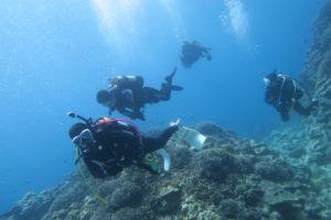 沖縄 慶良間 慶良間諸島 自社船 ダイビング ボートダイビング 体験ダイビング ファンダイビング