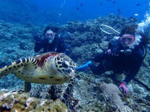 沖縄 慶良間 慶良間諸島 ダイビング 体験ダイビング ファンダイビング ウミガメ