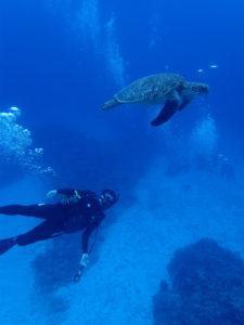 沖縄 慶良間 慶良間諸島 ダイビング 体験ダイビング ファンダイビング ボートダイビング アオウミガメ