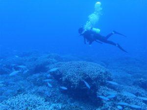 沖縄 慶良間 慶良間諸島 ダイビング 体験ダイビング ファンダイビング