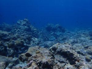沖縄 慶良間 ボートダイビング ダイビング