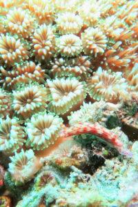 沖縄 慶良間 慶良間諸島 ダイビング 体験ダイビング ファンダイビング 体験ダイビング ボートダイビング