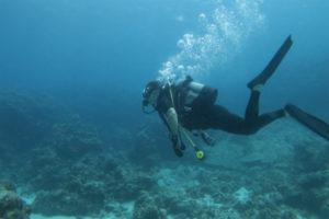 沖縄 慶良間 慶良間諸島 体験ダイビング ボートダイビング ファンダイビング DM講習
