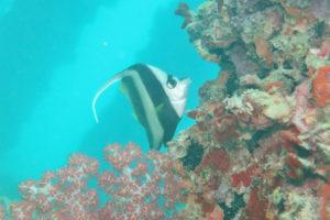 沖縄 本島 東海岸 金武 レッドビーチ ダイビング ファンダイビング ボートダイビング