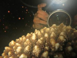 沖縄 北谷 砂辺 宮城海岸 サンゴ サンゴ産卵 2017 ビーチダイビング
