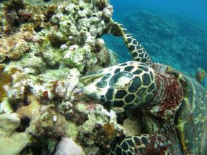 沖縄 慶良間 慶良間諸島 体験ダイビング ボートダイビング