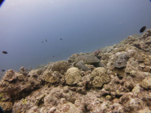 沖縄 慶良間 慶良間諸島 体験ダイビング ボートダイビング ウミガメ