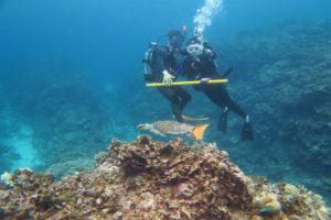沖縄 慶良間 慶良間諸島 体験ダイビング ファンダイビング ボートダイビング