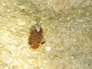 沖縄 宜野湾 ボートダイビング ファンダイビング ダイビング 沖縄本島