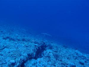沖縄 チービシ諸島 ナガンヌ島 クエフ島 ダイビング ファンダイビング ボートダイビング