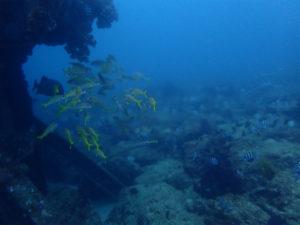 沖縄 ダイビング 近海 FUNダイビング