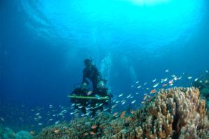 沖縄 ダイビング 慶良間 体験ダイビング FUNダイビング 自社船