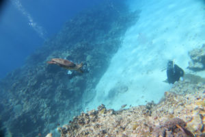 沖縄 慶良間 慶良間諸島 自社船 ファンダイビング ボートダイビング ダイビング