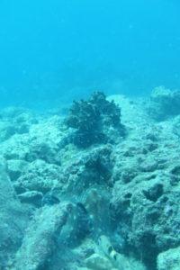 沖縄 砂辺 北谷 宮城海岸 ダイビング ビーチダイビング ファンダイビング