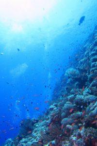 沖縄 渡名喜 渡名喜島 ボートダイビング ファンダイビング ダイビング 自社船