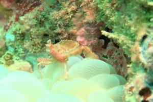沖縄 北谷 砂辺 ビーチダイビング ダイビング ファンダイビング