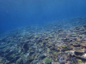 沖縄 ダイビング 慶良間 体験ダイビング 自社船