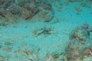 沖縄 ダイビング 本島近海 FUNダイビング 自社船