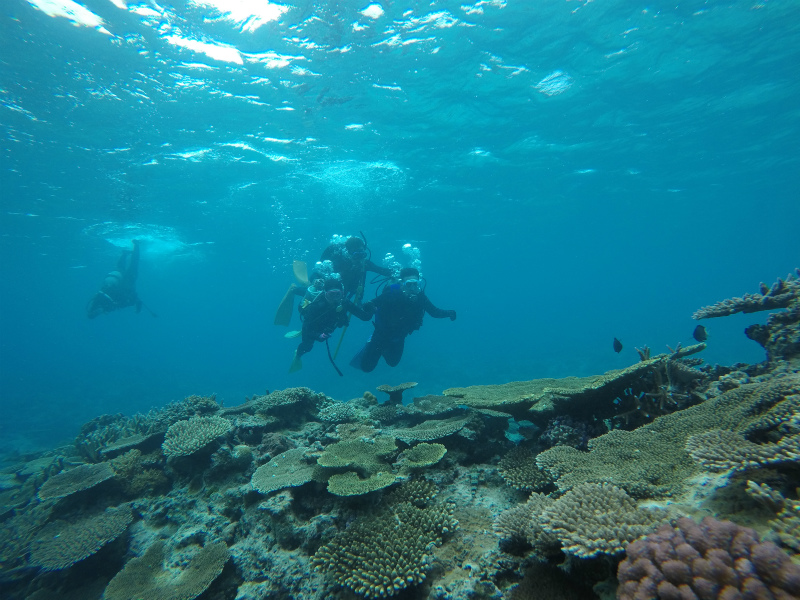 沖縄 慶良間 チービシ ナガンヌ ダイビング ボートダイビング 体験ダイビング 自社船