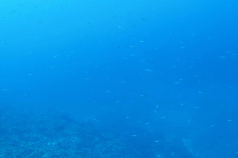 沖縄 慶良間 チービシ ダイビング ボートダイビング ファンダイビング 自社船
