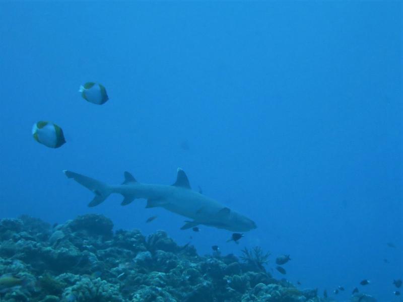 沖縄 慶良間 慶良間諸島 ダイビング ファンダイビング ボートダイビング ドリフトダイビング 自社船