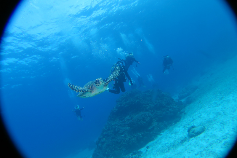 沖縄 慶良間 慶良間諸島 ダイビング ファンダイビング ボートダイビング 自社船