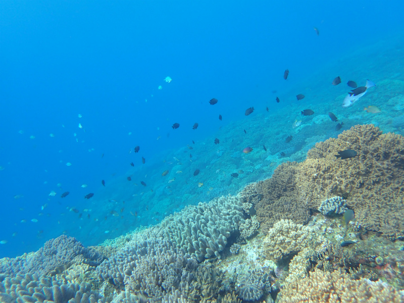 沖縄 ダイビング 近海 体験ダイビング