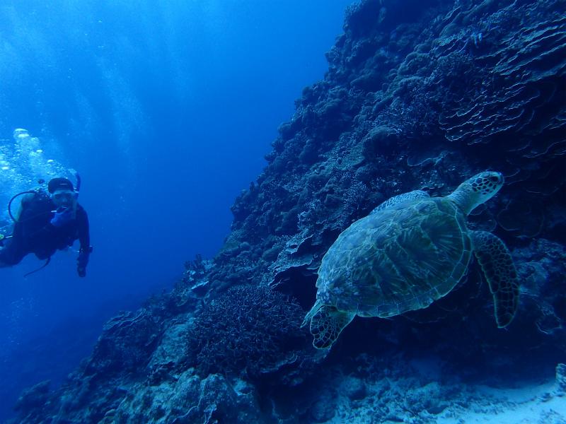 沖縄 慶良間 慶良間諸島 ダイビング ボートダイビング  講習 PADI OW 自社船