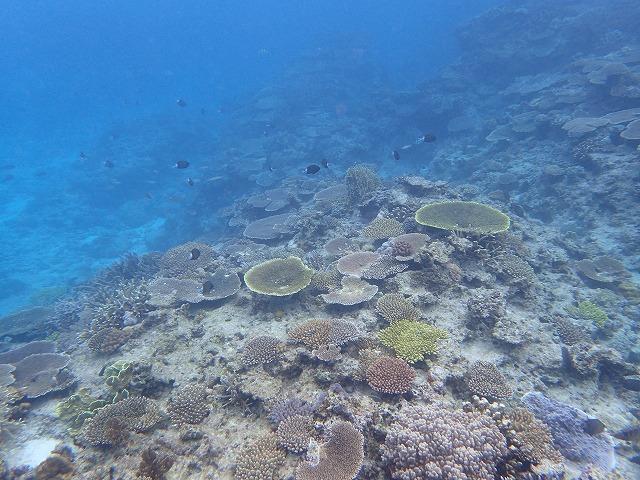 沖縄 ダイビング 慶良間 宜野湾 体験ダイビング FUNダイビング