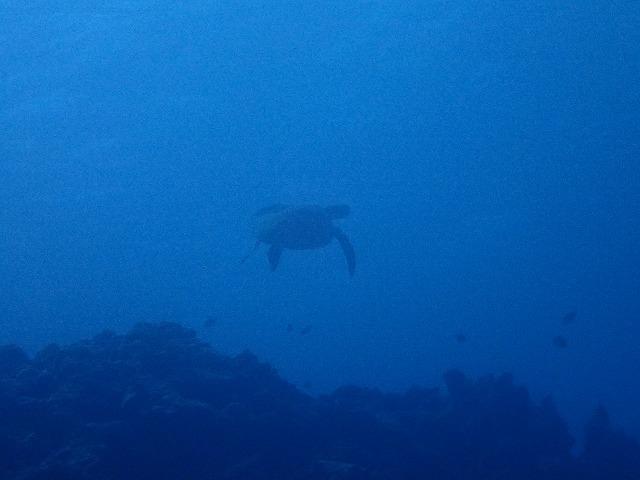 沖縄 ダイビング 金武ボート FUNダイビング