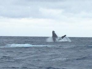 沖縄 ダイビング ボートダイビング 自社船