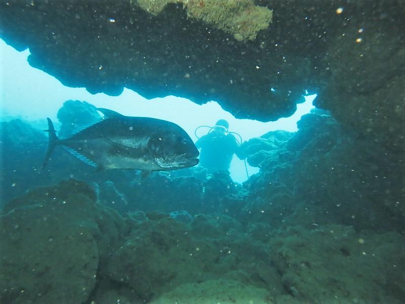 沖縄 本島 東海岸 漢那 ダイビング ボートダイビング ファンダイビング