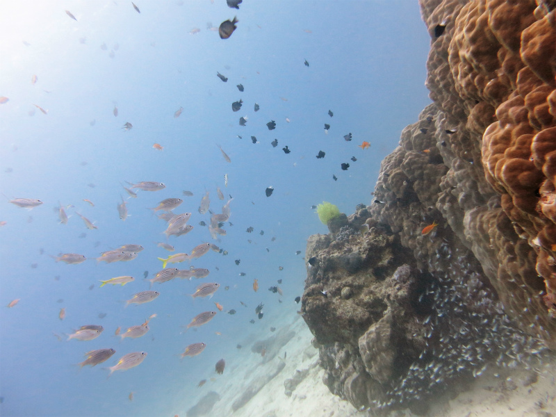 沖縄 本島 北部 ゴリラチョップ ビーチダイビング ダイビング ファンダイビング