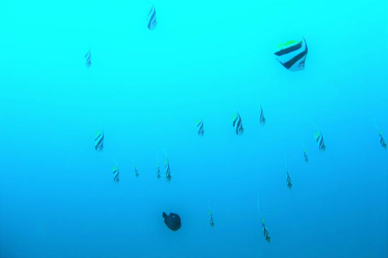 沖縄 沖縄本島 宜野湾 ボートダイビング ダイビング ファンダイビング