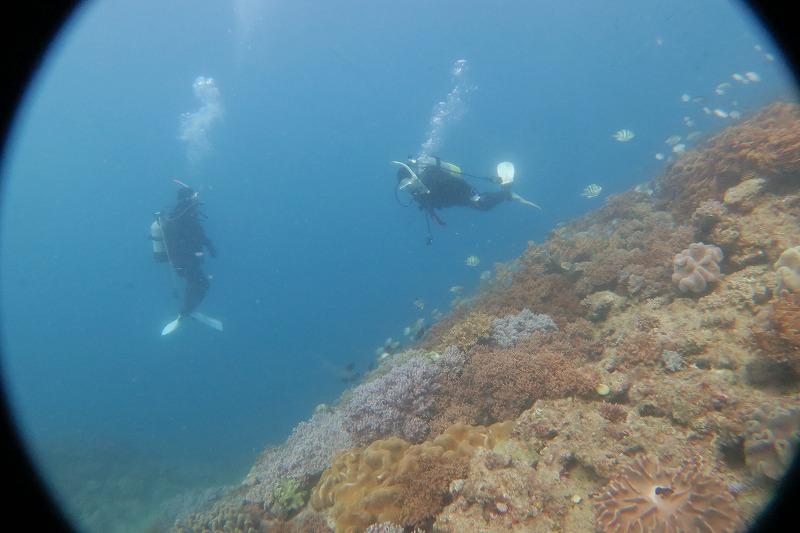 沖縄 ダイビング 近海ボート FUNダイビング