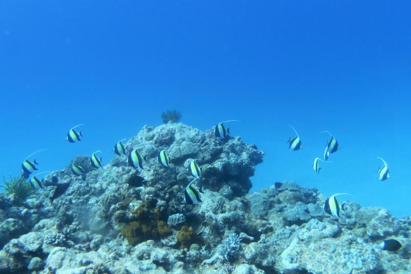 沖縄 チービシ ナガンヌ島 神山島 ダイビング ボートダイビング ファンダイビング