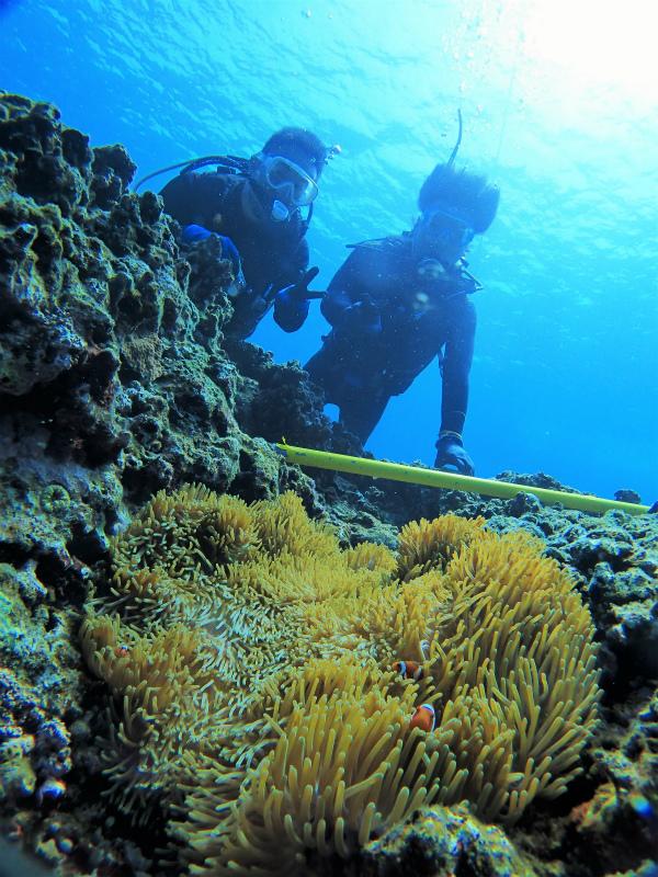 沖縄 慶良間 慶良間諸島 ダイビング ボートダイビング 体験ダイビング 自社