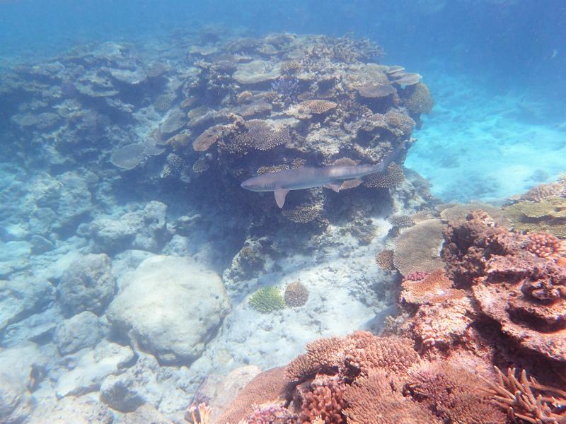 沖縄 慶良間 チービシ ダイビング 体験ダイビング ボートダイビング 自社船