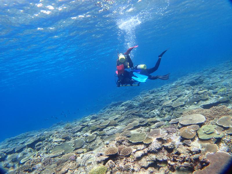 沖縄 慶良間 慶良間諸島 ダイビング ボートダイビング 自社船 体験ダイビング