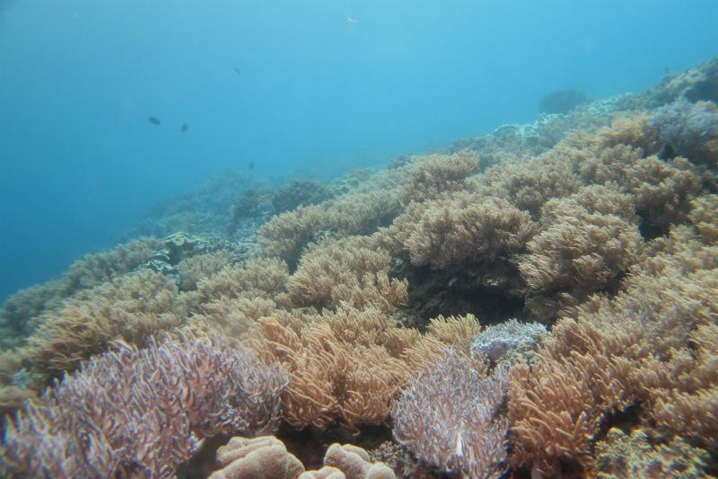 沖縄 ダイビング 砂辺 ファンダイビング ビーチダイビング