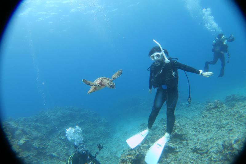 沖縄 ダイビング 慶良間 FUNダイビング 体験ダイビング