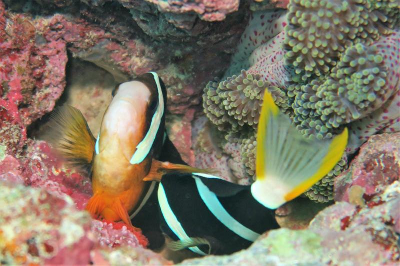沖縄 北谷 砂辺 ダイビング ビーチダイビング 水中ポスト
