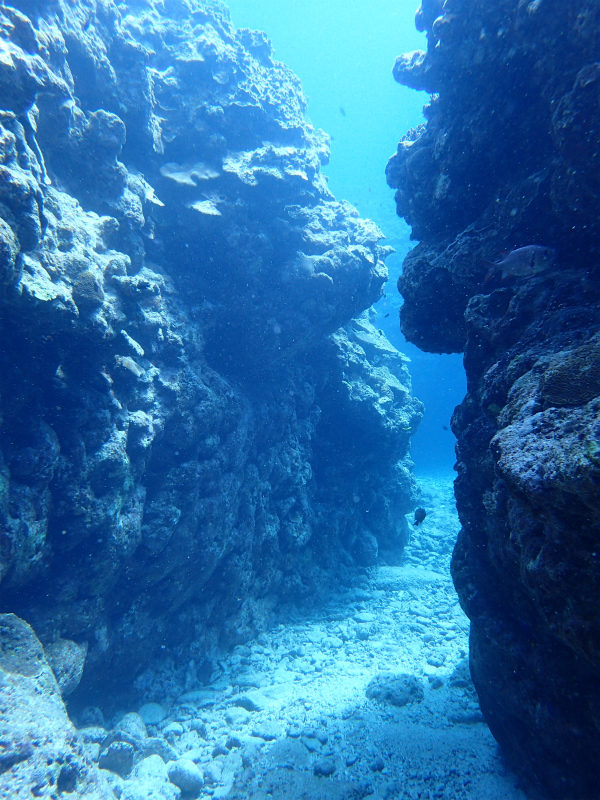 沖縄 慶良間 慶良間諸島 ダイビング ボートダイビング 自社船 ファンダイビング