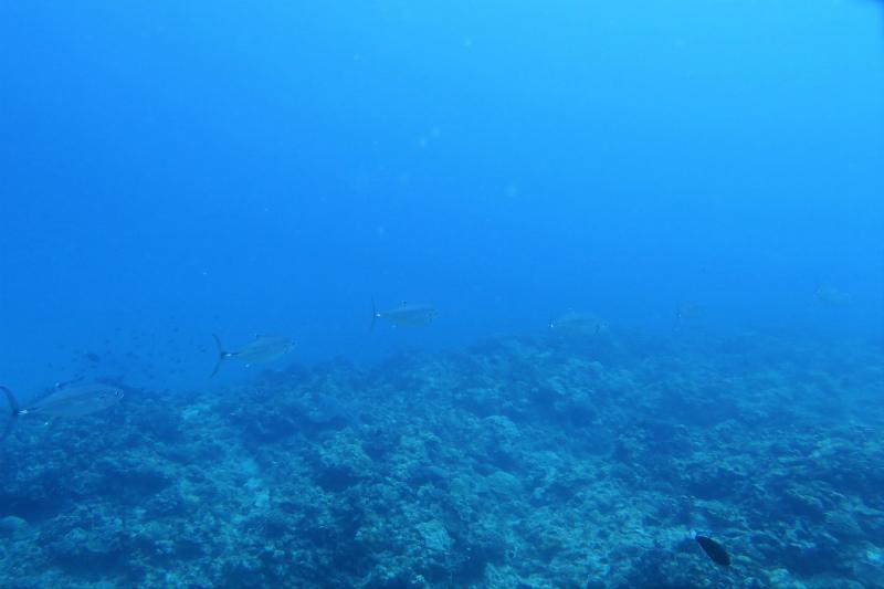 沖縄 慶良間 慶良間諸島 ダイビング ボートダイビング 自社船