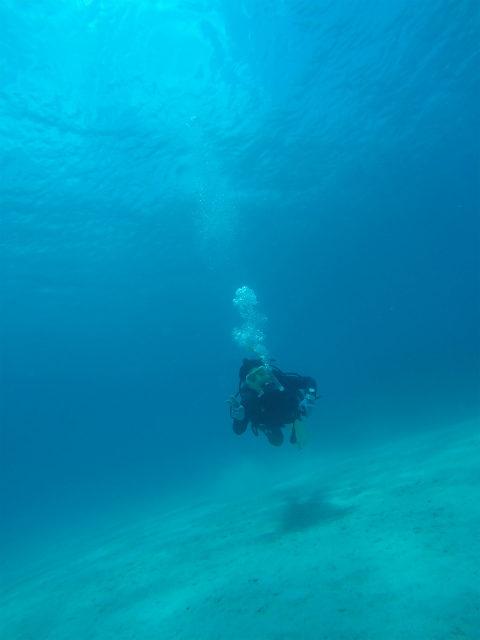 沖縄 北部 本部 ゴリラチョップ ダイビング OW 講習 PADI