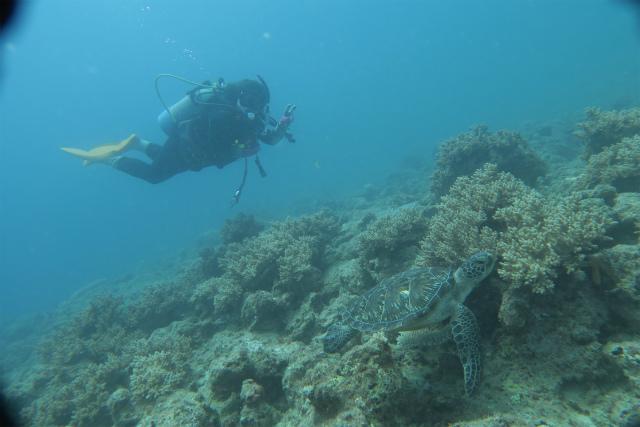 沖縄 イナンビシ クマノミパラダイス 沖縄本島 ダイビング ボートダイビング